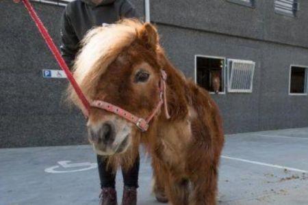 اخبارگوناگون,خبرهای گوناگون,اسبی که پاهایش شاخ دارد