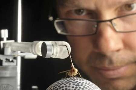 ساخت نسل جدید سمعک با الهام از حشرات