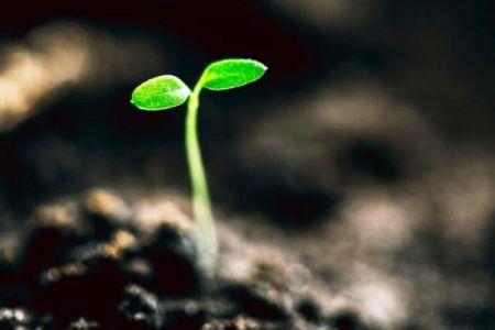 اخبارعلمی,خبرهای علمی, مغز گیاهان