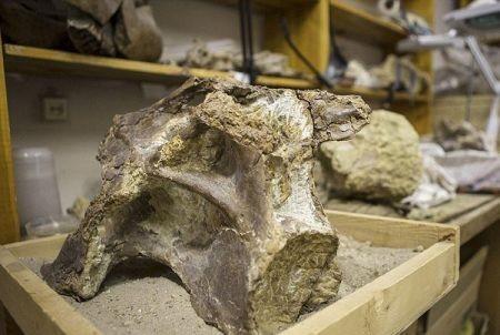 اخبارعلمی ,خبرهای  علمی ,قبرستان دایناسور