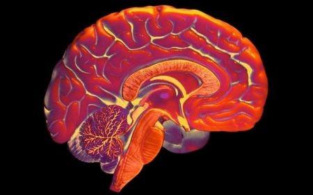 اخبارعلمی ,خبرهای علمی,مینی مغز
