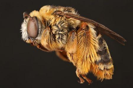 اخبارگوناگون,خبرهای گوناگون,دنیای حیرتانگیز زنبورها