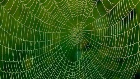 اخبارعلمی ,خبرهای علمی, تغذیه عنکبوتها