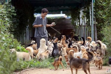 مرد چینی ۷۰۰ سگ ولگرد را در ۸ سال نجات داد