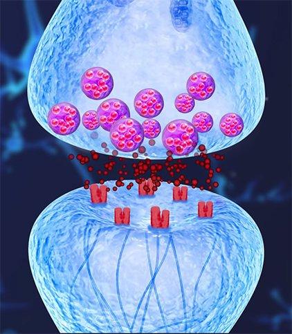 اخبارعلمی ,خبرهای علمی  ,سلولهای عصبی