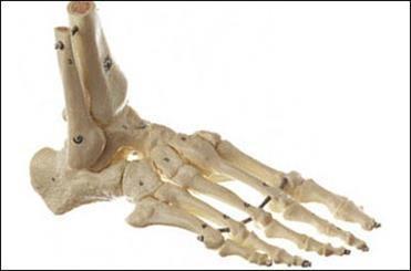 استخوان طبیعی در آزمایشگاه تولید شد