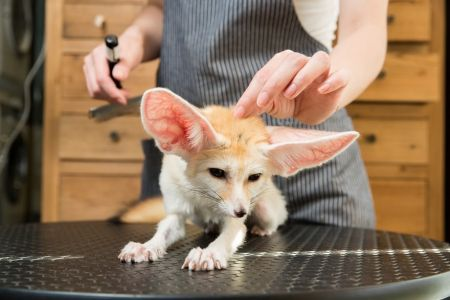 اخبارگوناگون ,خبرهای  گوناگون, حیوانات خانگی عجیب و غریب