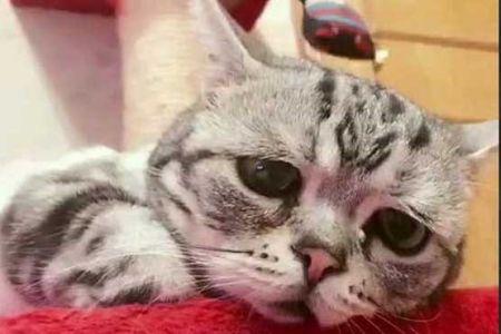 اخبار گوناگون ,خبرهای  گوناگون , پر طرفدارترین گربه جهان