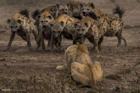 اخبار,انعکاس, عکس های مسابقه طبیعت نشنالجئوگرافی