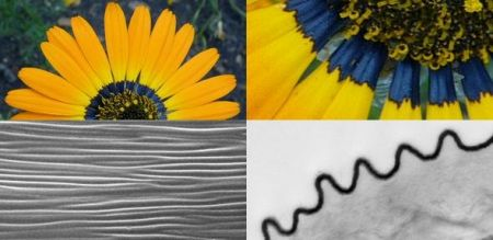 اخبارعلمی,خبرهای  علمی, زنبورها