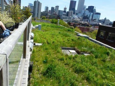 اخبار علمی,خبرهای  علمی , سقفهای سبز