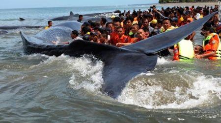 اخبار گوناگون,خبرهای  گوناگون,خودکشی نهنگ غول پیکری