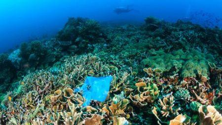 اخباراجتماعی,خبرهای   اجتماعی ,اقیانوس دریا