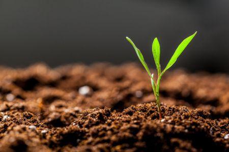 اخبار علمی ,خبرهای  علمی ,باکتری خاک