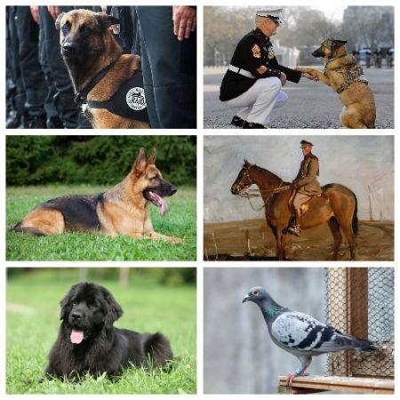 اخبار,اخبار گوناگون,حیواناتی که مدال شجاعت گرفتند