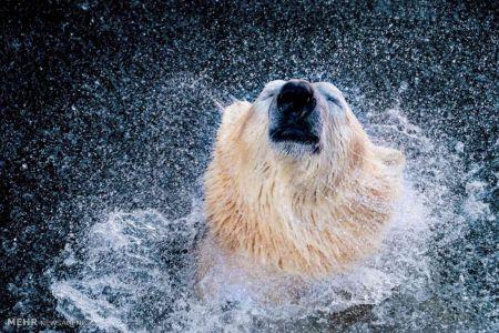 اخبار,اخبار گوناگون,تصاویر زیبا از دنیای حیوانات