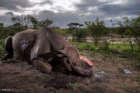اخبار,اخبار گوناگون,برندگان مسابقه عکاسی حیات وحش ۲۰۱۷