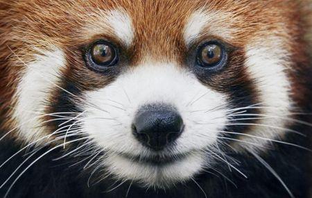 اخبار,اخبارگوناگون,حیوانات زیبایی که به زودی منقرض میشوند.