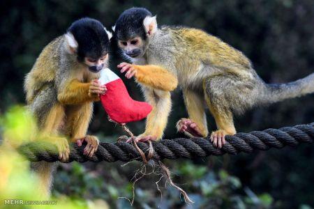 هدیه کریسمس برای حیوانات باغ وحش