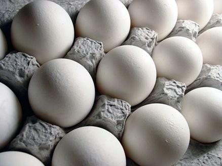 قیمت تخممرغ رو به کاهش است/ نرخ منطقی شانهای ۱۲ هزار و ۶۰۰ تومان
