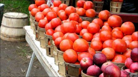 خوردن سیب و گوجه فرنگی آسیب ریوی را بهبود می بخشد