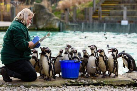 اخبار,اخبار گوناگون,سرشماری سالانه باغ وحش لندن