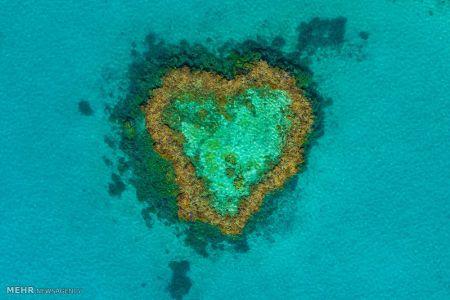 اخبار,اخبار گوناگون,صخره های مرجانی کوئینزلند