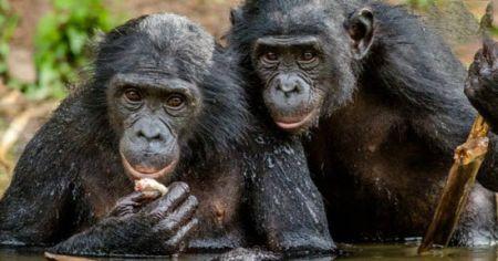 اخبار,اخبارگوناگون,  هدیه دادن در دنیای حیوانات