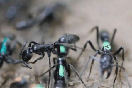 اخبار علمی ,خبرهای  علمی ,مورچه ها
