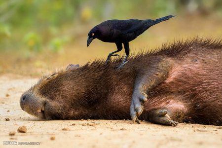 اخبار,اخبارگوناگون, فینالیست های مسابقه عکاسی پرندگان