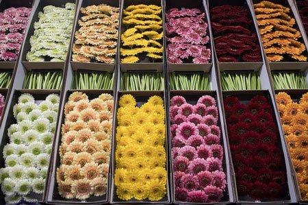 عکسهای جالب,عکسهای جذاب, بازار گل