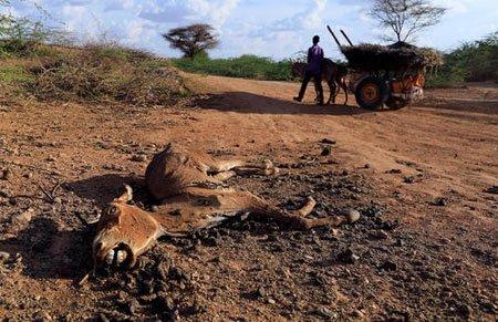 عکسهای جالب,عکسهای جذاب, سومالی