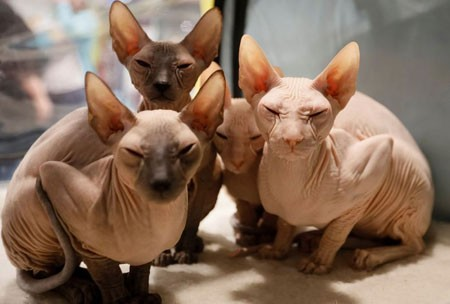 عکسهای جالب,عکسهای جذاب,نمایشگاه گربهها