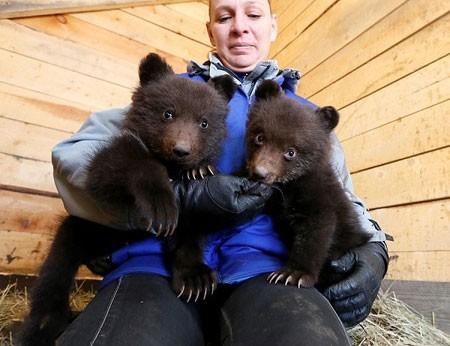 عکسهای جالب,عکسهای جذاب, خرس