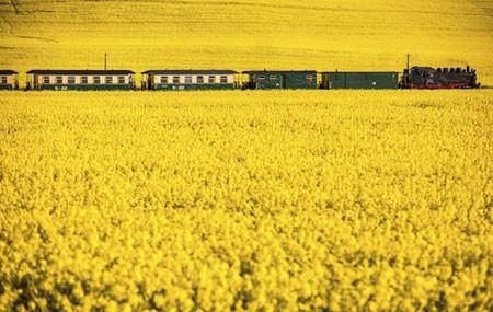 عکسهای جالب,عکسهای جذاب, راه آهن
