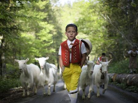 عکسهای جالب,عکسهای جذاب,مراسم نمادین بردن گاوها