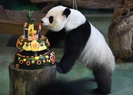 عکسهای جالب,عکسهای جذاب,جشن تولد