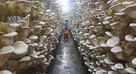 عکسهای جالب,عکسهای جذاب,کِشت قارچ