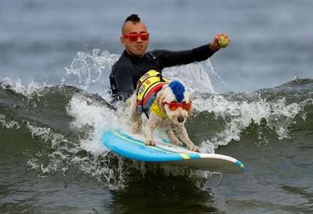 عکسهای جالب,عکسهای جذاب,موج سواری سگ ها