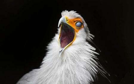 عکسهای جالب,عکسهای جذاب,مرغ منشی