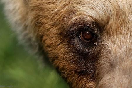عکسهای جالب,عکسهای جذاب, خرس قهوهای