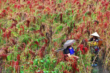 عکسهای جالب,عکسهای جذاب,کشاورزان چینی