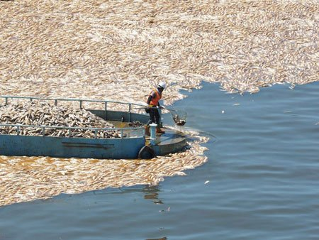 عکسهای جالب,عکسهای جذاب,ماهیهای مرده