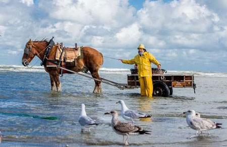 عکسهای جالب,عکسهای جذاب,ماهیگیران اسب سوار