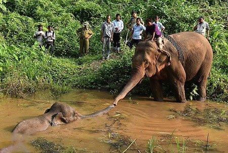 عکسهای جالب,عکسهای جذاب,نجات فیل مجروح