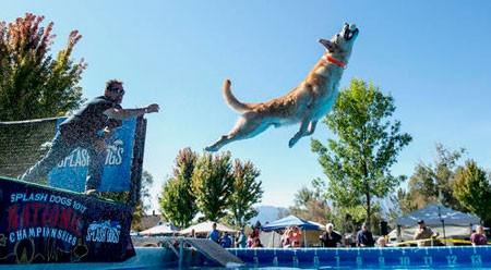 عکسهای جالب,عکسهای جذاب,مسابقات سالانه قهرمانی سگ ها