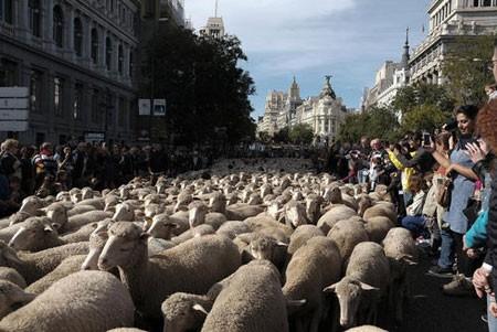 عکسهای جالب,عکسهای جذاب, گوسفندان