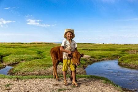 عکسهای جالب,عکسهای جذاب, گوساله
