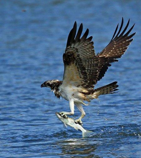 عکسهای جالب,عکسهای جذاب, شکار ماهی قزل آلا