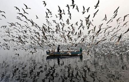 عکسهای جالب,عکسهای جذاب, مرغ های دریایی